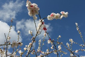 Spring in Creswick by Amy Tsilemanis